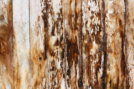 mold and fungus on damp spruce planks, result of water infiltration in building