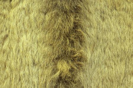 beautiful rare: european lynx textured fur, real pelt from hunted animal