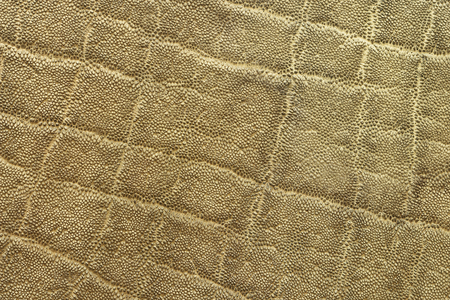 textured detail of african elephant pelt ( Loxodonta adaurora ) Stock Photo