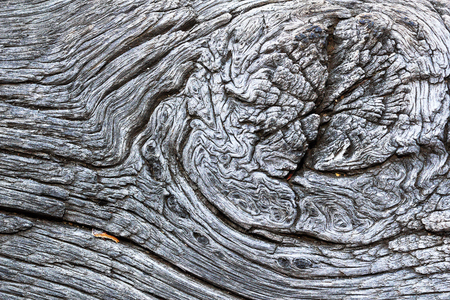 beautiful knot on old oak board, textural image of weathered plank ( Quercus robur )