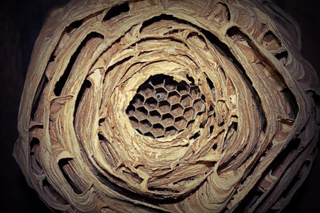 closeup of european hornet nest ( Vespa crabro ); this wasp prefers to build the nest in dark places