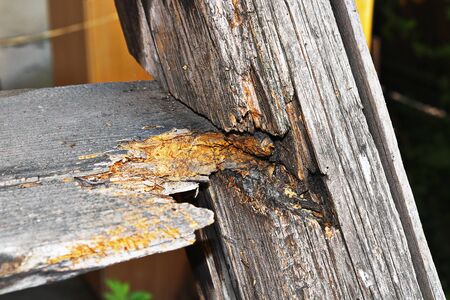 fungus decay on old wooden stair, effects of dampness