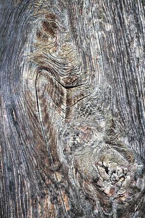 old surface of wooden plank, texture for your design