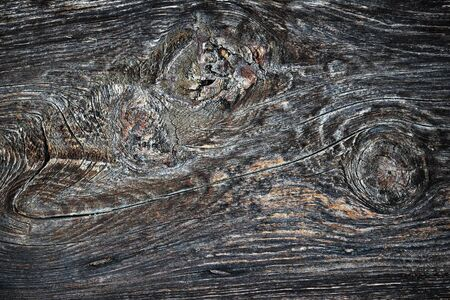 weathered knotty spruce plank, wooden texture for your design ( Picea abies )