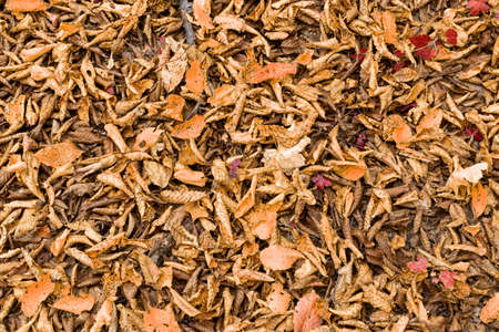 textured natural leaf cover in autumn, backdrop for your design Standard-Bild