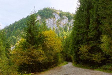 mountain road in Apuseni Natural Park, image taken in fall season