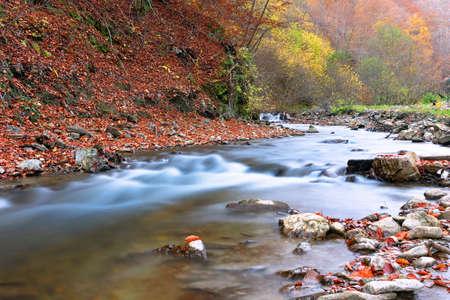 beautiful mountain river in Apuseni, image taken in autumn season near Scarita Belioara Standard-Bild