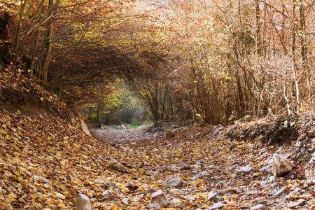 vegetation tunnel on a mountain road, Apuseni National Park, Romania