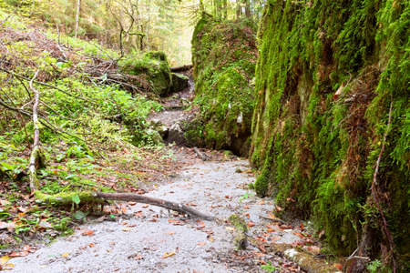 footpath surrounded by mossy stones  in Apuseni natural park