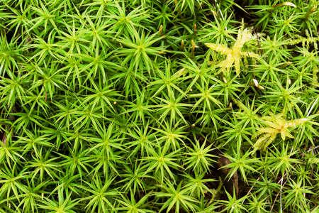macro shot of natural green fresh moss pattern Standard-Bild