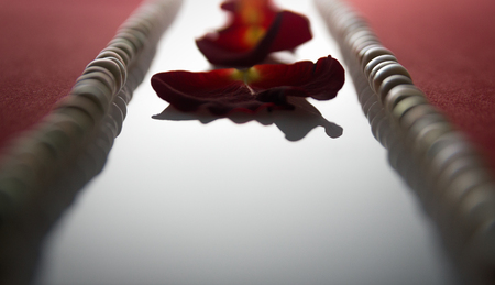 wallpaper International Women s Day: Rose petals in a row between the red bands and pearls
