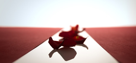 wallpaper International Women s Day: Rose petals in a row between the red stripes Kho ảnh