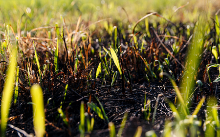 Green grass lawn and burnt old dry grass Stock Photo