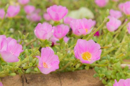 massif de fleurs: Parterre de fleurs avec des fleurs d'�t� dynamiques