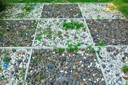 Gravel texture path in garden.