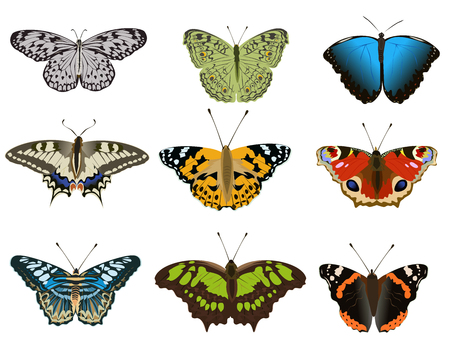 set of various types colorful butterfly on white background