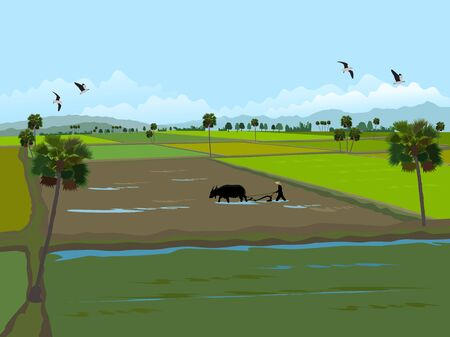 Farmers are using buffalo to cultivate the soil,Palm trees and mountains in the background