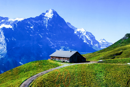 Swiss beauty, meadows under Jungfrau photo