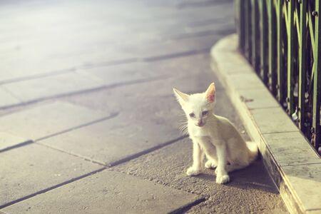 emaciated: Lonely little homeless kitten on the street. Stock Photo