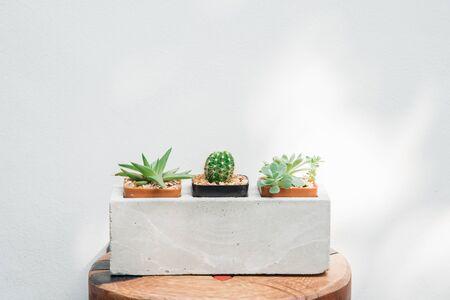 Ccactus in potten close-up met natuur licht op witte muur achtergrond.