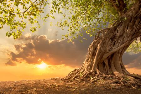 ensolarado: bela árvore ao pôr do sol laranja vibrante com espaço da cópia livre.