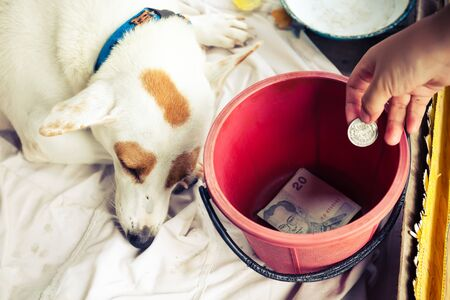 dog waiting: Poor dog waiting people give money on box.