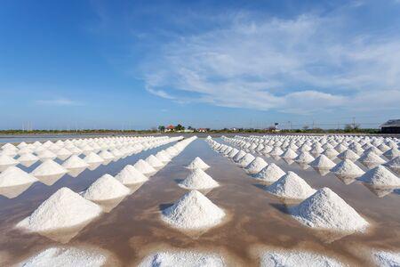 briny: Salt in sea salt farm ready for harvest, Thailand. Stock Photo