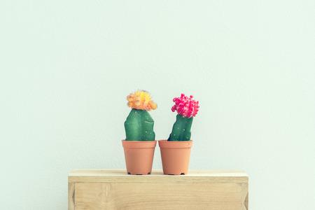 ヴィンテージ背景にセメント鍋にサボテンの植物。