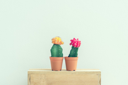 Cactus plants in cement pot on vintage background.