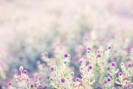 Blurred pink flower field with light abstract background stock blurred pink flower field with light abstract background stock photo 69112128 mightylinksfo