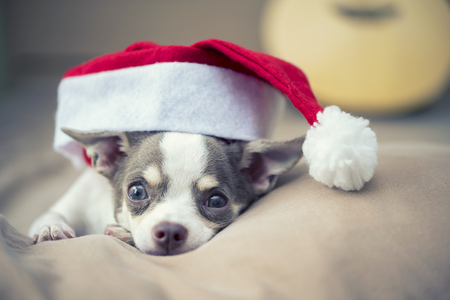 Merry Christmas concept. A little cute dog with Santa hat on bed. Holiday background.