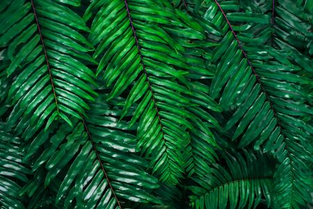 Abstract background from green leaf pattern in tropical forrest with sunlight. Nature backdrop. 写真素材