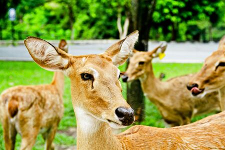 animal vein: deer