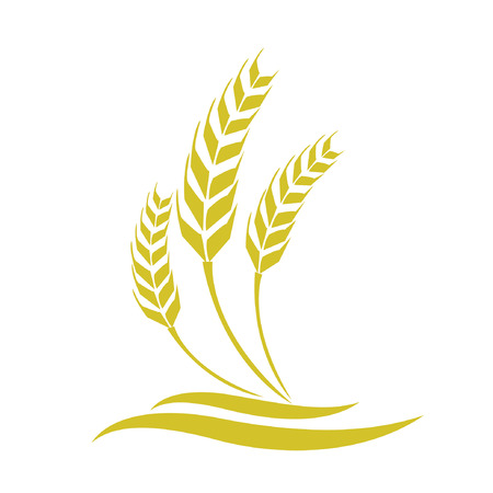 Wheat vector Vector