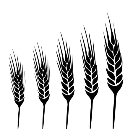vecter: wheat vecter