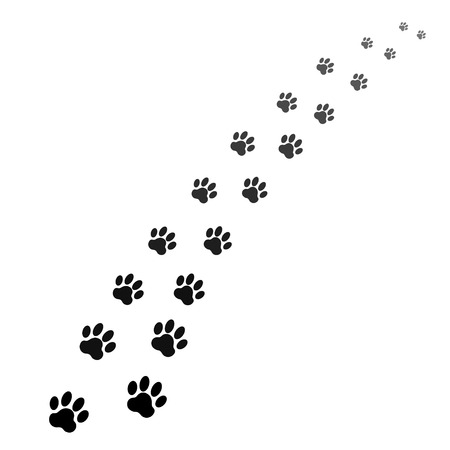dog paw: footprints of dog