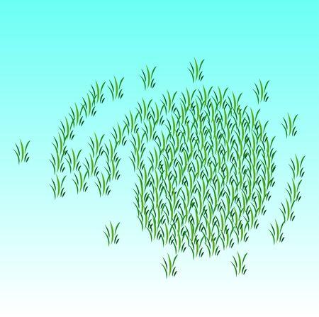 paddy field: Rice fields