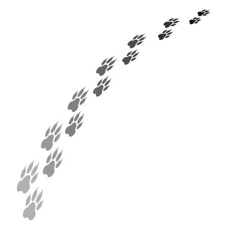 tigre blanc: empreinte de patte