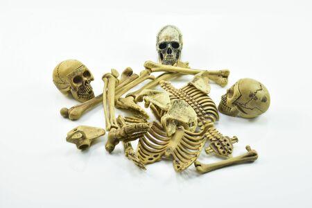 esqueleto: esqueleto humano aislado en el fondo blanco