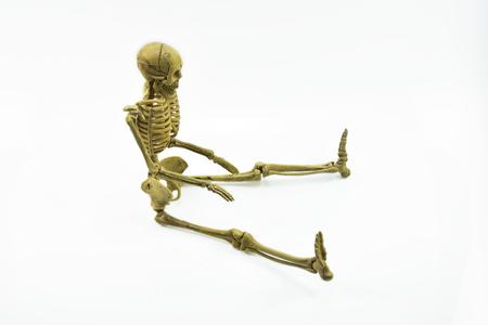 adult bones: human skeleton isolated on white background Stock Photo
