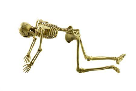 human bones: esqueleto humano aislado en el fondo blanco