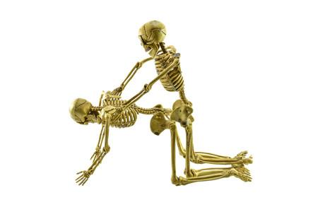 human skeleton model lovers having on white background