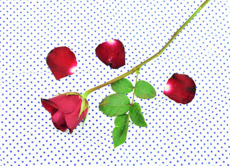 handkerchief: Rose flower on handkerchief background