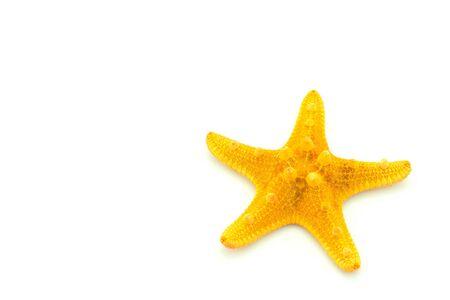 star fish: starfish