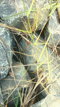 disorganized: The ston and grass
