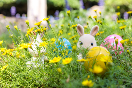 Rabbit Finds Eggs for Easter at Yellow Flower Garden Reklamní fotografie
