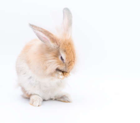 Lovely rabbit standing on two legs with eggs on a white background. Cute Red bunny isolated for easter concept.