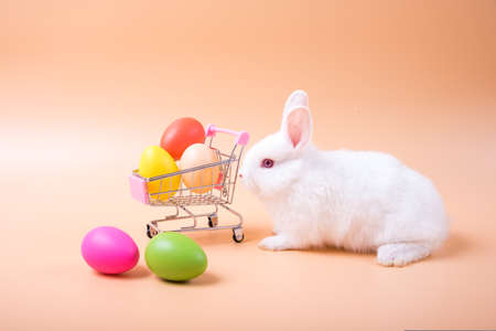 Lovely rabbit sitting Beside the shopping cart with eggs on a white background. Cute Red bunny shopping in easter holiday concept. Stockfoto