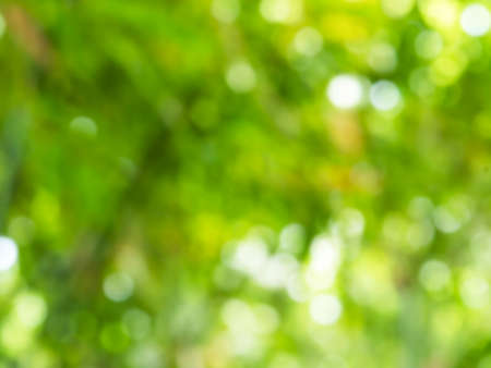 Green texture background, bokeh background, Blur concept .Abstract unfocused blured bokeh of Fresh nature healthy or bio concept. Stockfoto