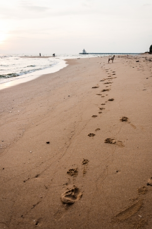 Dogs footprint on the beach photo
